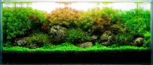 30_1aquarium_stem_plants_fishtank